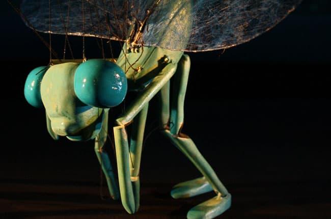 Circul insectelor 3